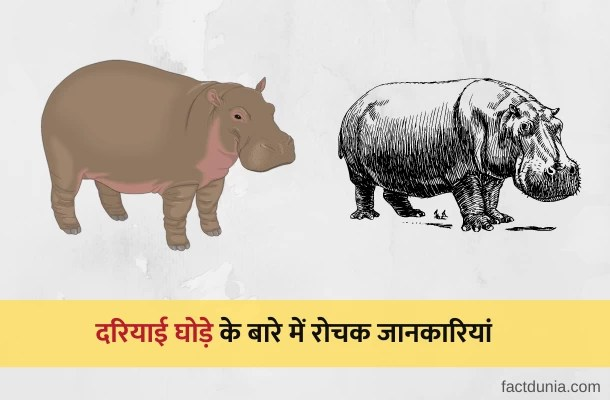 दरियाई घोड़े की 20 रोचक जानकारी – Facts About Hippopotamus in Hindi