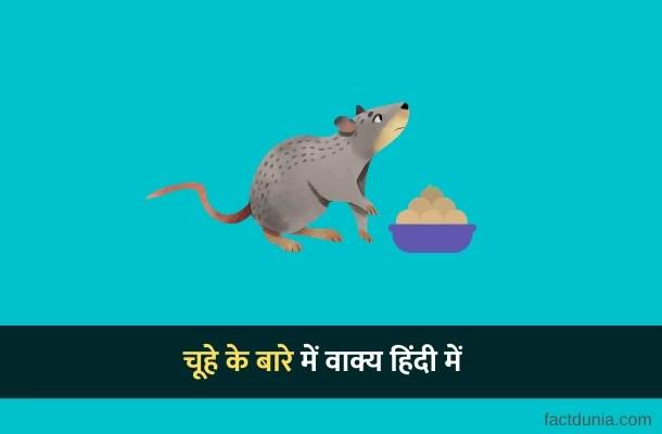 चूहे के बारे में 10 लाइन वाक्य – 10 Lines on Rat in Hindi