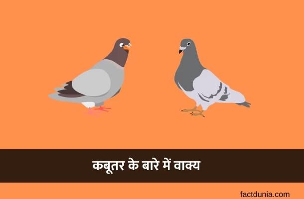 कबूतर पर 5-10-20 वाक्य – 10 Lines on Pigeon in Hindi