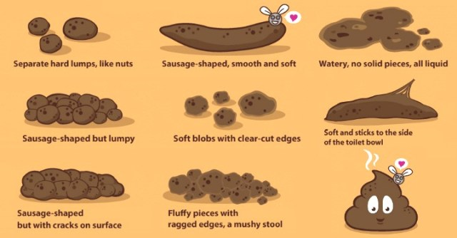Everything You Need to Know About Your Poop ~ http://facthacker.com/facts-about-your-poop/
