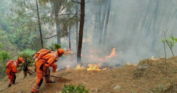 Smoke and Fumes – Understanding the Forest Fire Numbers