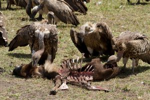 factoring broker vultures feeding frenzy