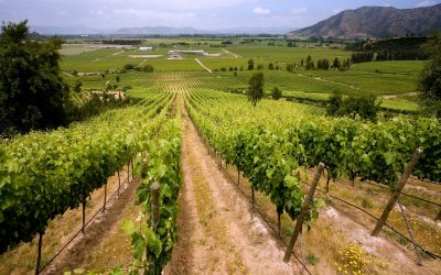 Viña Chilena, es reconocida entre las Top 100 productoras de vino a nivel mundial