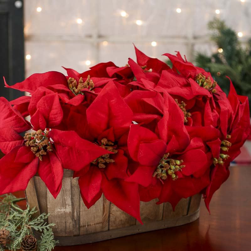 Red Wedding Cake Poinsettias