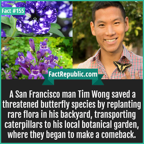 155. Tim Wong Butterfly-A San Francisco man Tim Wong saved a threatened butterfly species by replanting rare flora in his backyard, transporting caterpillars to his local botanical garden, where they began to make a comeback.