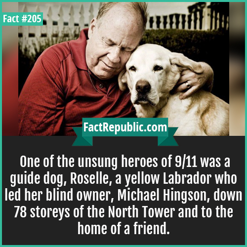 205. blind mans guide rossel-One of the unsung heroes of 9/11 was a guide dog, Roselle, a yellow Labrador who led her blind owner, Michael Hingson, down 78 storeys of the North Tower and to the home of a friend.