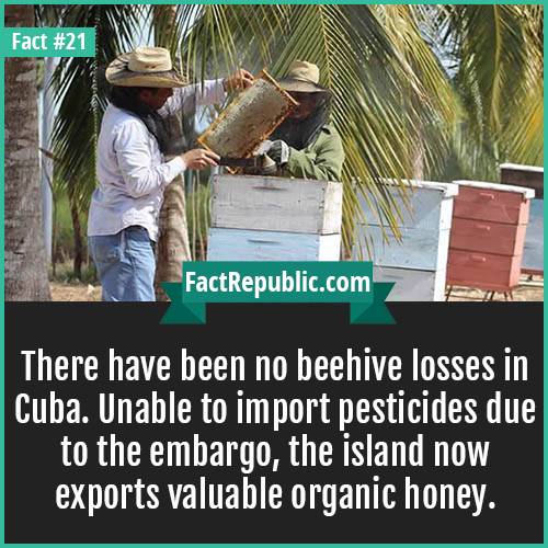 21. Cuba Honey-There have been no beehive losses in Cuba. Unable to import pesticides due to the embargo, the island now exports valuable organic honey.