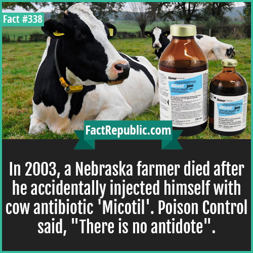 338. Micotil cow-In 2003, a Nebraska farmer died after he accidentally injected himself with cow antibiotic 'Micotil'. Poison Control said, 'There is no antidote'.