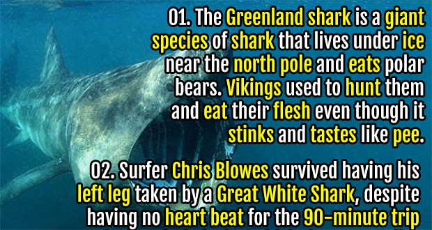 interesting facts about sharks fact republic 50 interesting facts about sharks