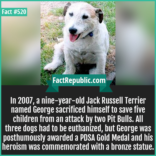 520-George dog-In 2007, a nine-year-old Jack Russell Terrier named George sacrificed himself to save five children from an attack by two Pit Bulls. All three dogs had to be euthanized, but George was posthumously awarded a PDSA Gold Medal and his heroism was commemorated with a bronze statue.