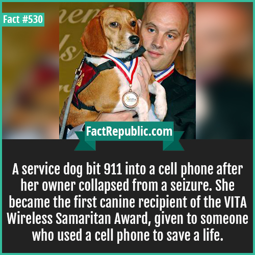 530. 1 samaritan dog-A service dog bit 911 into a cell phone after her owner collapsed from a seizure. She became the first canine recipient of the VITA Wireless Samaritan Award, given to someone who used a cell phone to save a life.