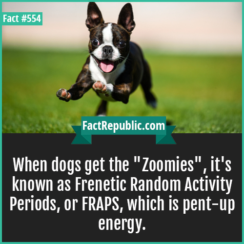554-Zoomies-When dogs get the