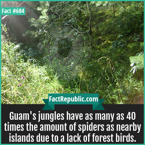 684. Guam's jungle Spiders-Guam's jungles have as many as 40 times the amount of spiders as nearby islands due to a lack of forest birds.