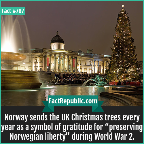 "787. Norway UK Christmas Tree-Norway sends the UK Christmas trees every year as a symbol of gratitude for ""preserving Norwegian liberty"" during World War 2."