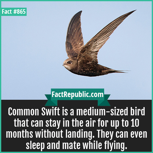 865. Common Swift-Common Swift is a medium-sized bird that can stay in the air for up to 10 months without landing. They can even sleep and mate while flying.