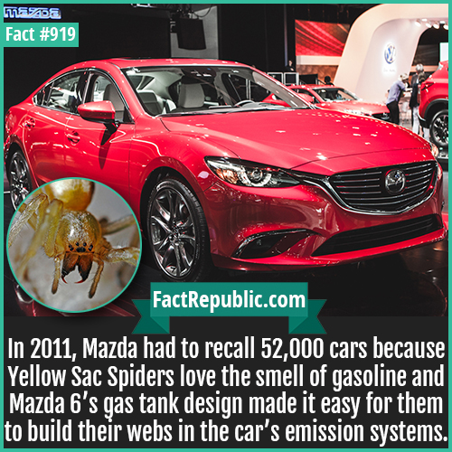 919. Mazda6 Spider Recall-In 2011, Mazda had to recall 52,000 cars because Yellow Sac Spiders love the smell of gasoline and Mazda 6's gas tank design made it easy for them to build their webs in the car's emission systems.