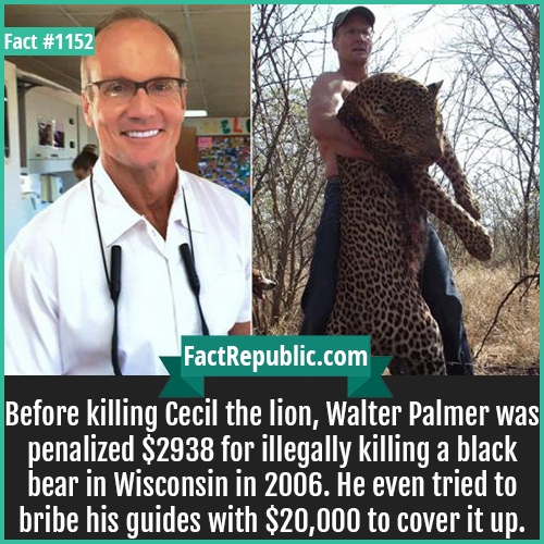 1152. Walter Palmer-Before killing Cecil the lion, Walter Palmer was penalized $2938 for illegally killing a black bear in Wisconsin in 2006. He even tried to bribe his guides with $20,000 to cover it up.