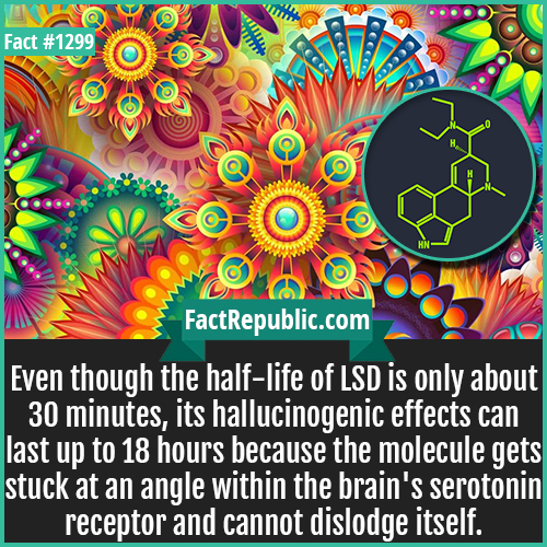 1299. LSD Molecule-Even though the half-life of LSD is only about 30 minutes, its hallucinogenic effects can last up to 18 hours because the molecule gets stuck at an angle within the brain's serotonin receptor and cannot dislodge itself.