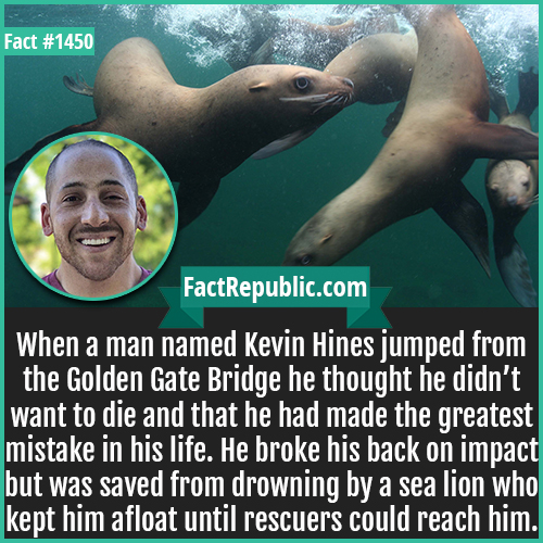 1450. Kevin Hines-When a man named Kevin Hines jumped from the Golden Gate Bridge he thought he didn't want to die and that he had made the greatest mistake in his life. He broke his back on impact but was saved from drowning by a sea lion who kept him afloat until rescuers could reach him.