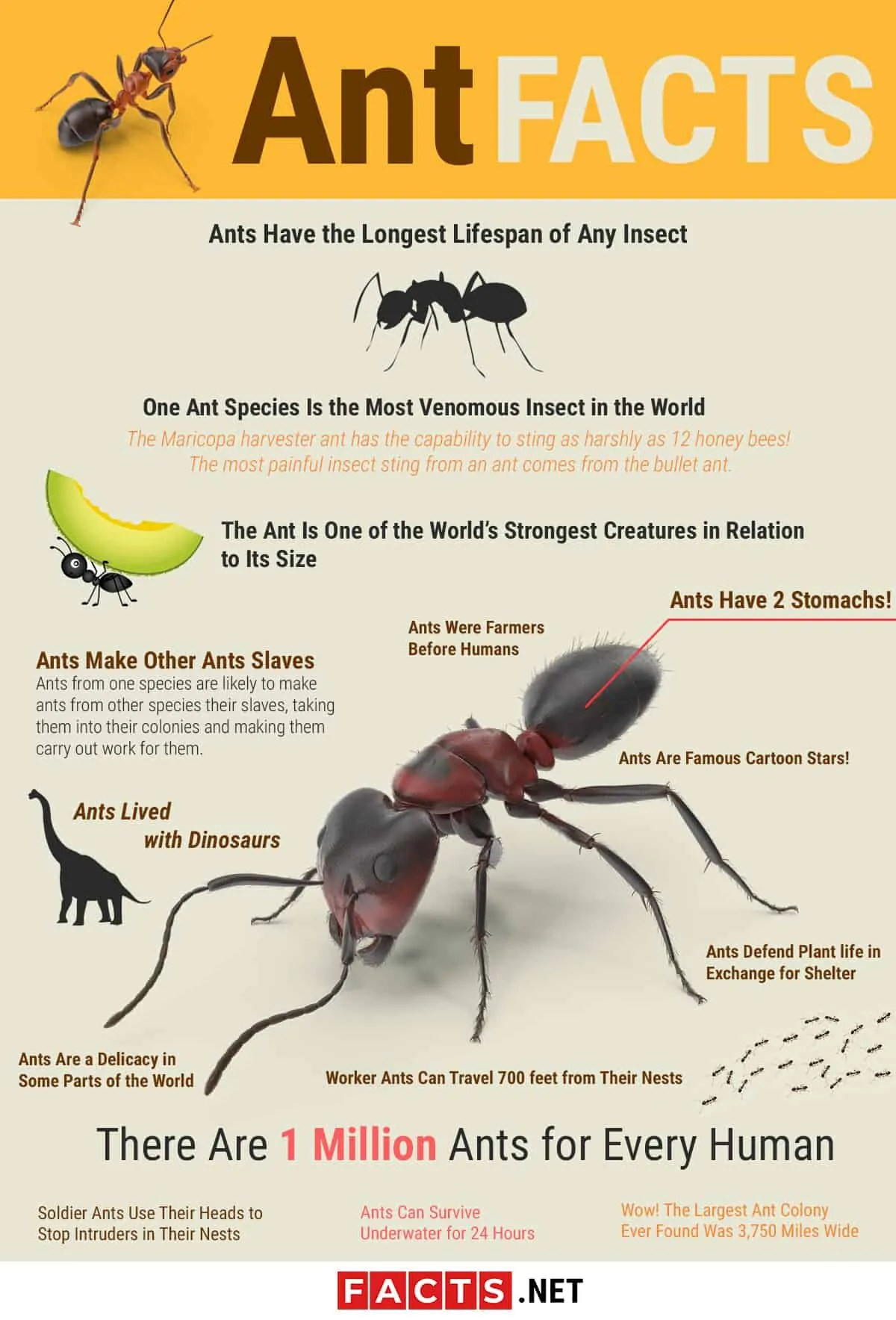 Top 15 Ant Facts