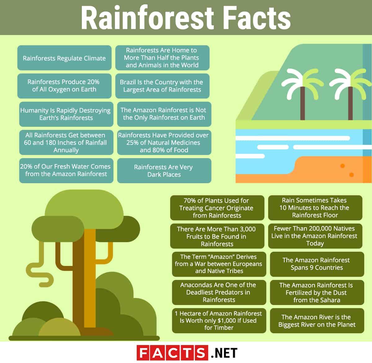 20 Rainforest Facts
