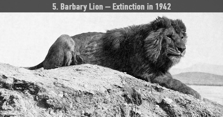 10 Rare Footage And Photographs Of Extinct Animals