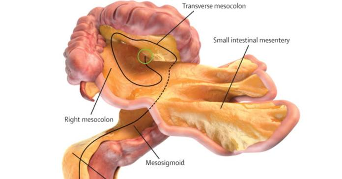 Scientists Discover 79th Body Organ