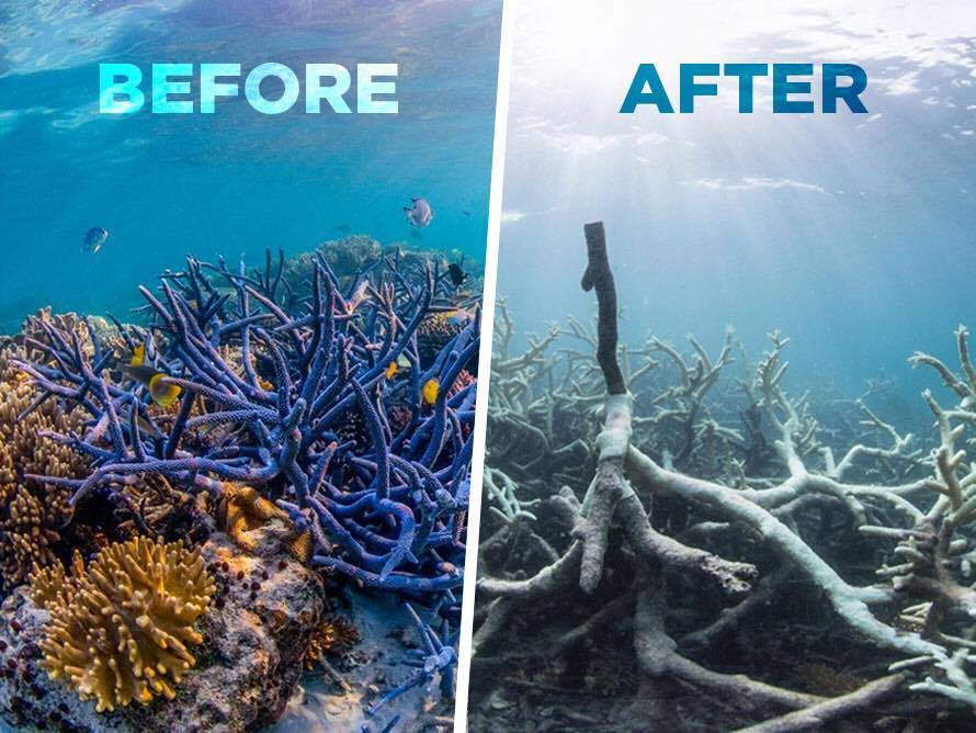 Great-Barrier-Reef-Destroyed