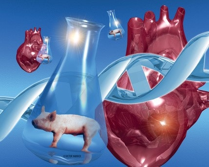 Ethical Issues in Xenotransplantation