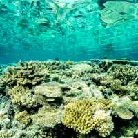 Great Barrier Reef Facts for Kids - Largest Coral System in the World