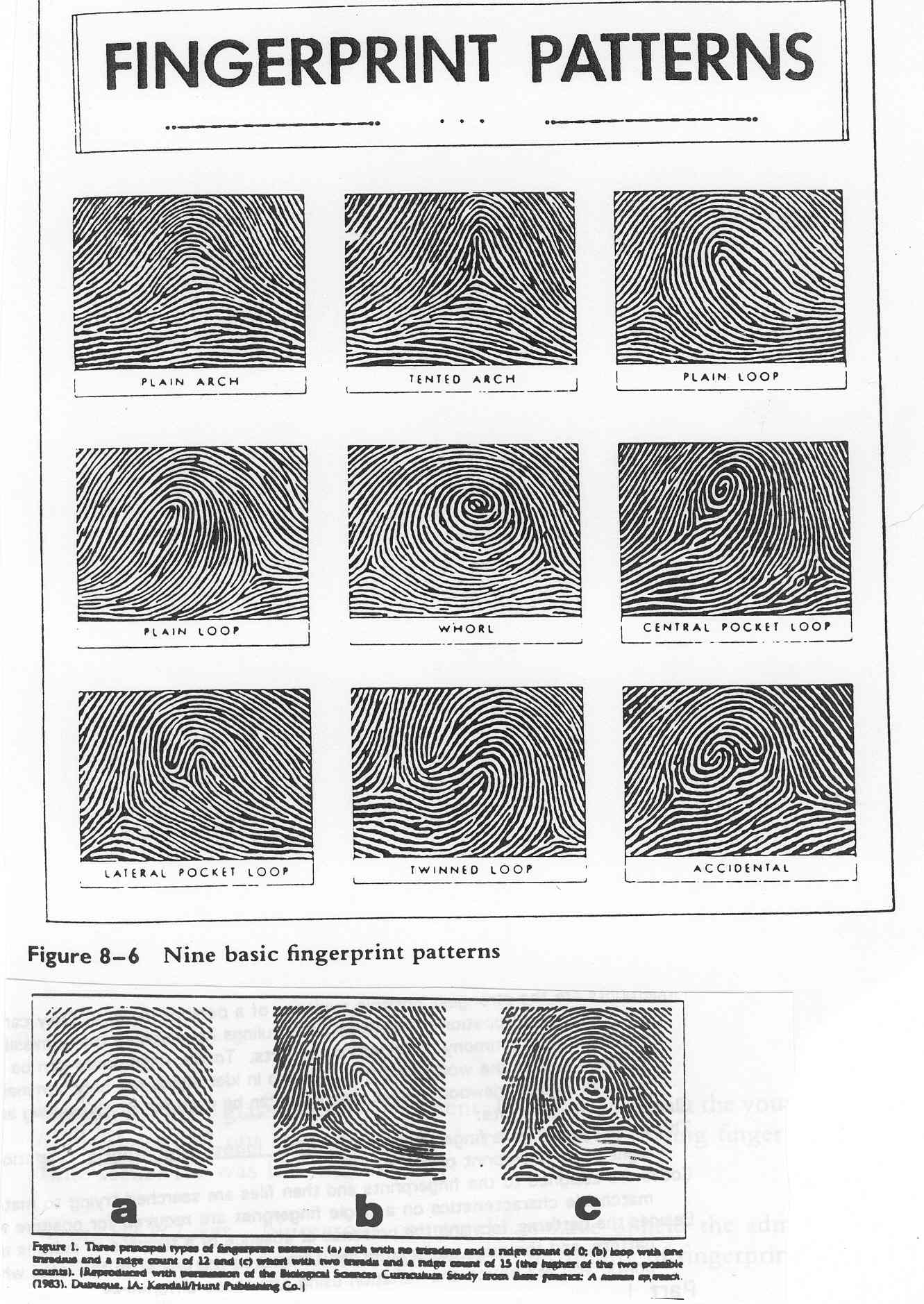 Matching Fingerprint Identification Worksheet