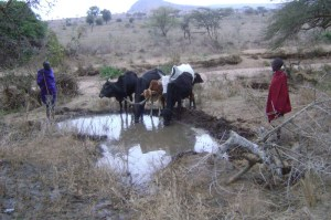 These animals couldn't share the former limited supply of water.