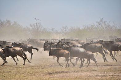 buffell2