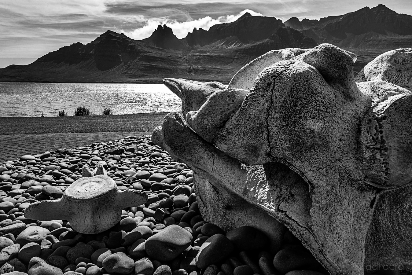 photo of whale scull bone overlooking a Fjord in Iceland