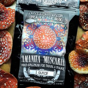 """Picture of a black package with a label reading """"AMANITA MUSCARIA, dried specimens for tisane & magick"""". The package contains fly agaric mushrooms and is sold by Willowisp Witchery. The link to the Etsy shop is listed at the bottom of the package and reads """"willowispwitchery.etsy.com"""". Surrounding the package are many brightly colored red and orange Amanita Muscaria mushrooms with white spots. These mushrooms are used to make an herbal tea, or for ornamental purposes and use in witchcraft."""