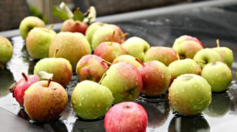 Apples, Alberta, Home Grown
