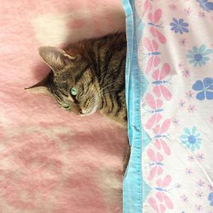 Elle mtonnera toujours heaven cat catsofinstagram catstagram ilovemycat