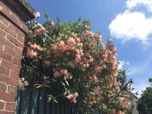 Ressortir en charpe de portage flowers blue sky nofilter