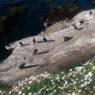 Birds basking in the sun.