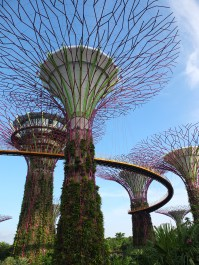 The Supertree Grove at Gardens by the Bay!