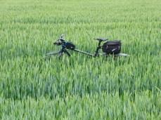 tag-des-fahrrads-81