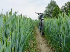 tag-des-fahrrads-83