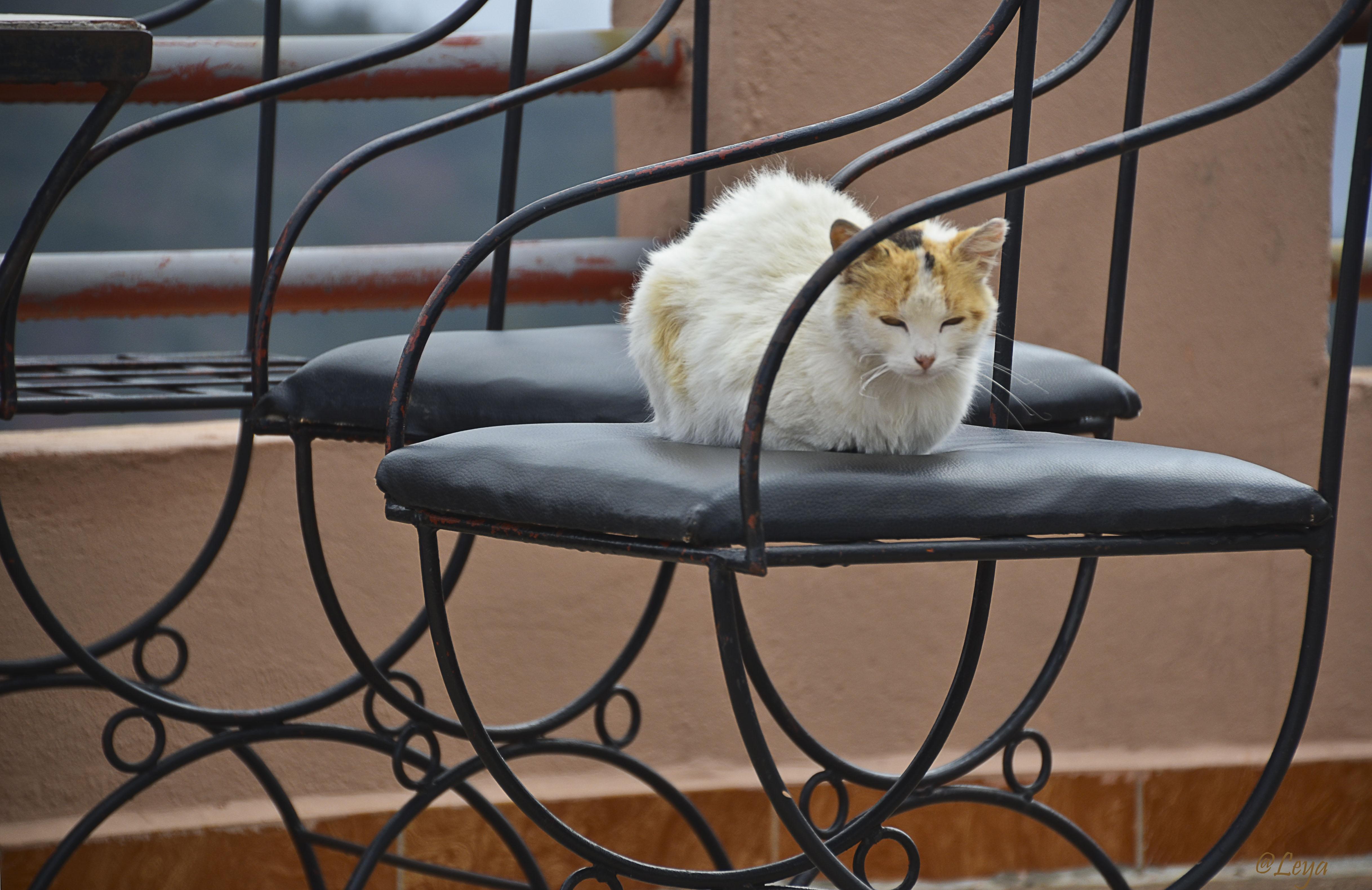 Moroccan Cats III