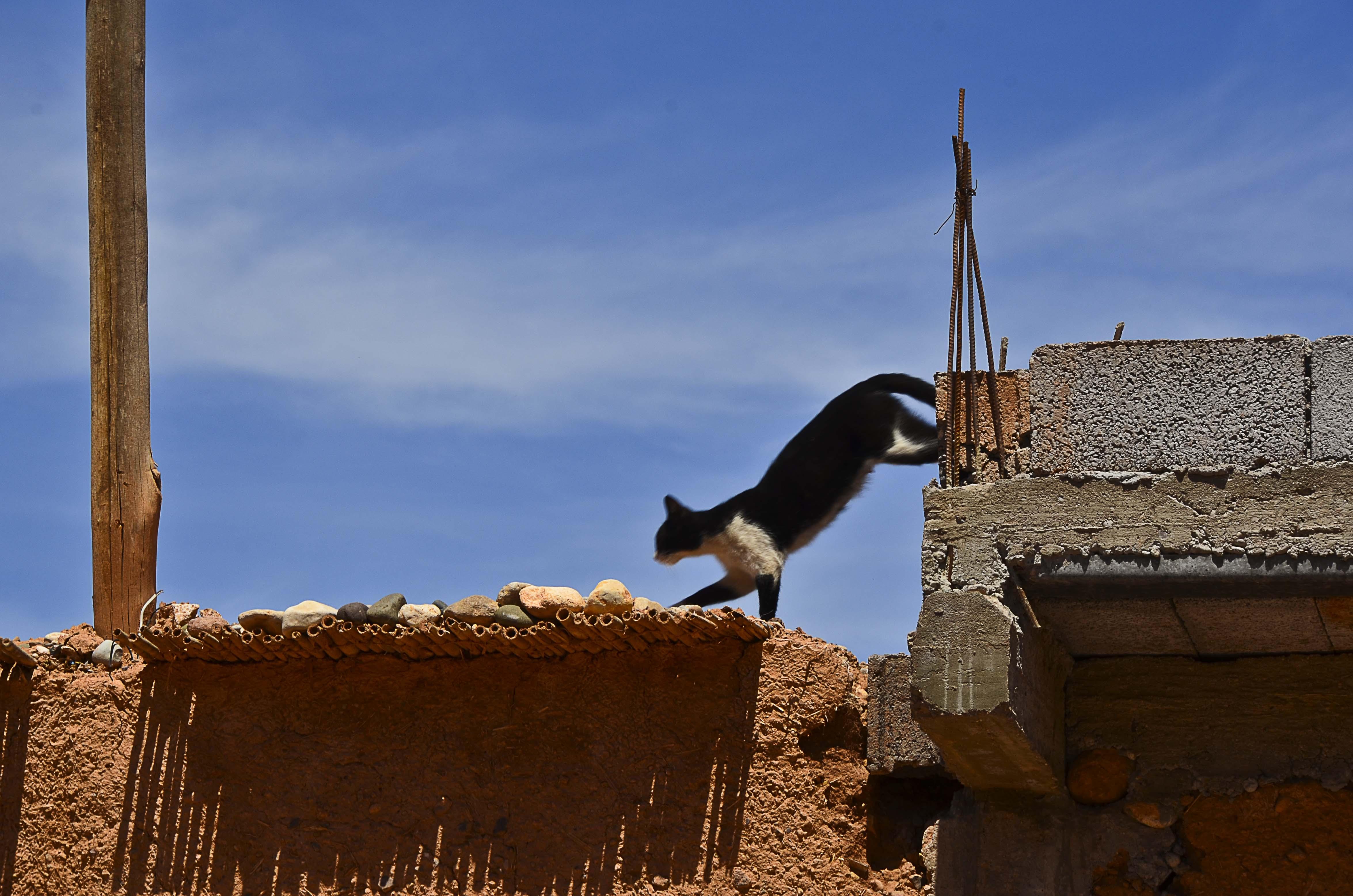 Moroccan Cats I