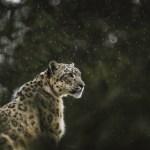 wildlife_bg