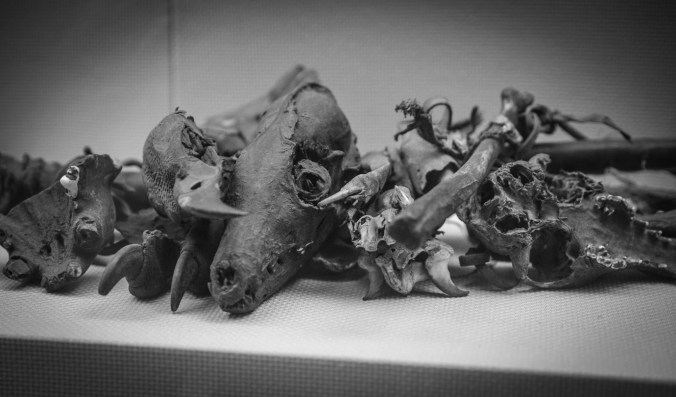 Tibetan shamans use animal bones as ornaments.