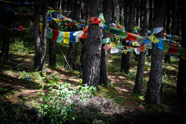 Prayer flags in the forest at Paoma.