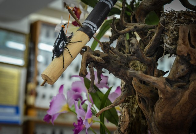 beetle on a stick