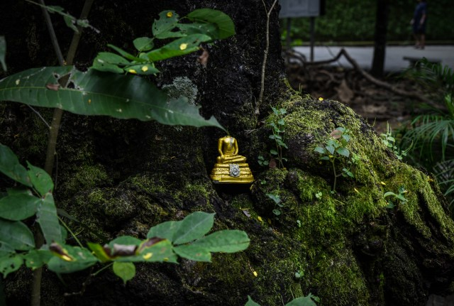 Hidden Buddha in the trees.