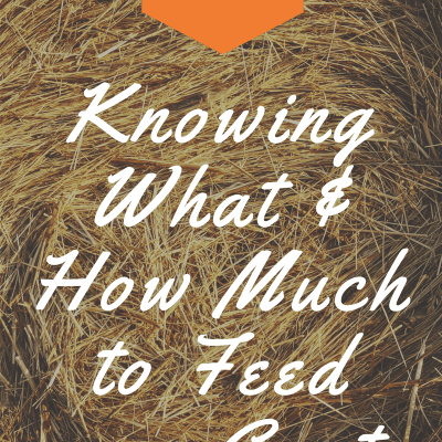 Goat Feed: What and How Much?